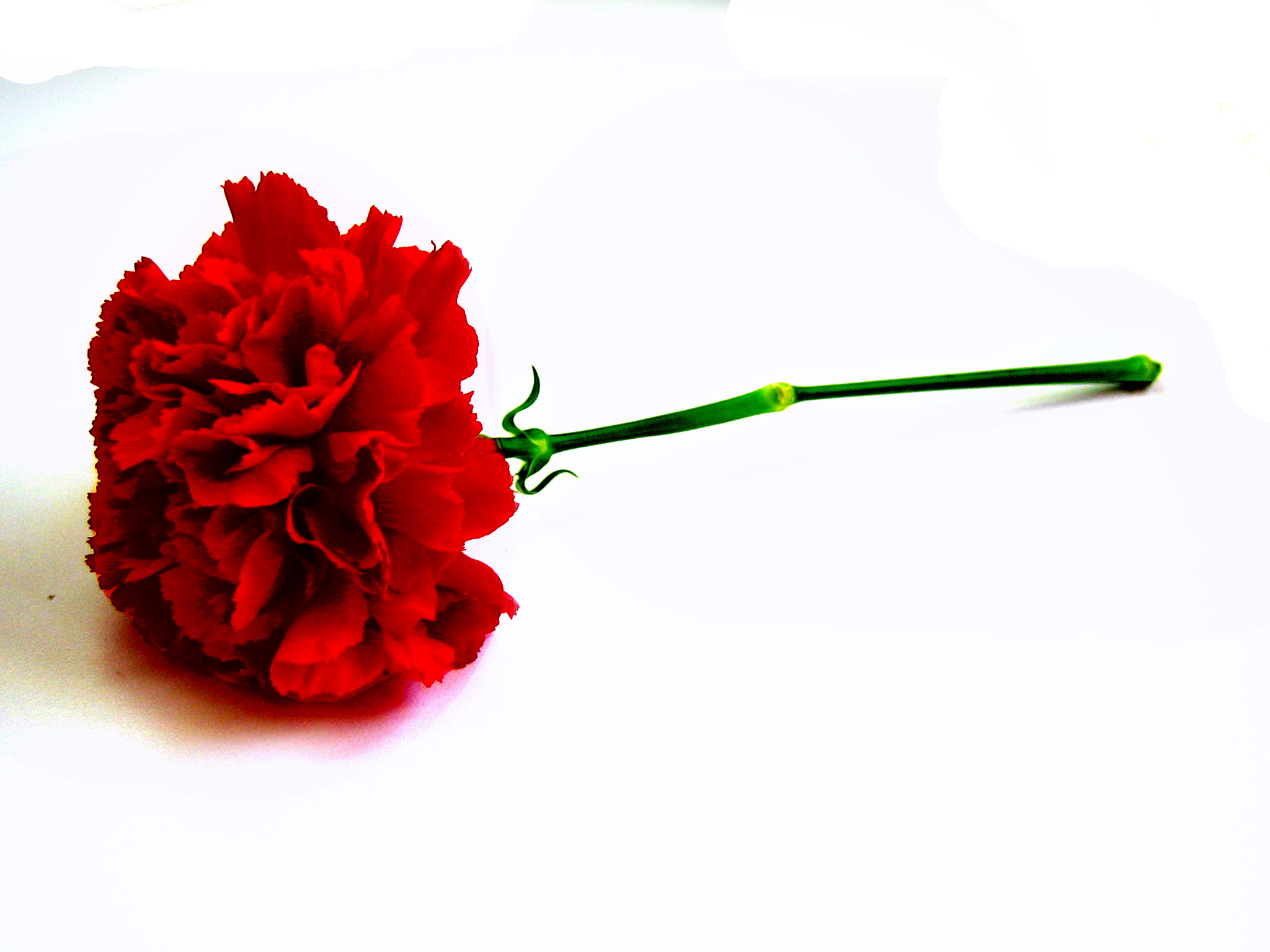 Red Carnation Valentines Ideas